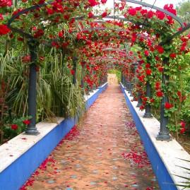 Pasillo floral